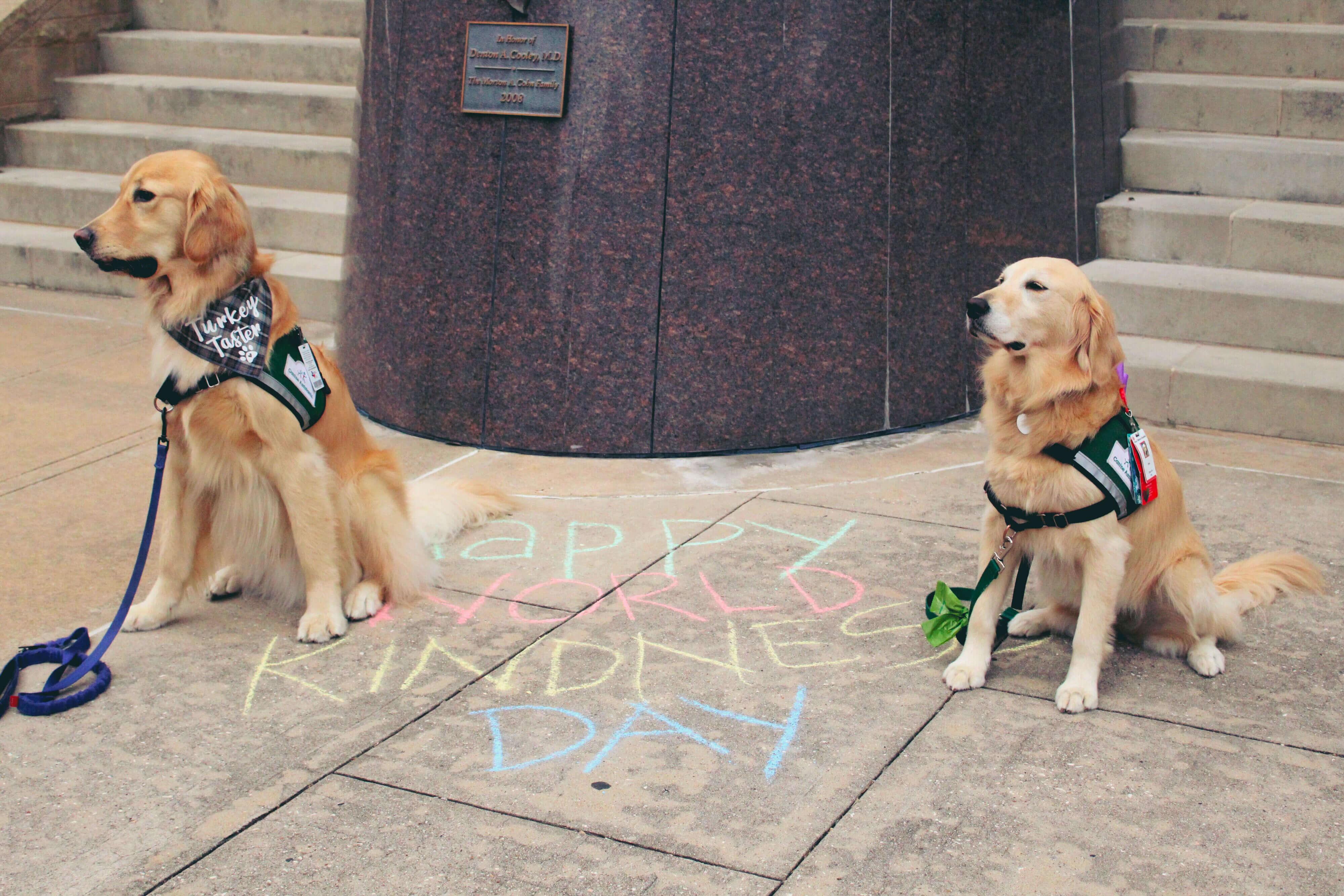 "Two golden retrievers sit beside pavement chalk artwork reading ""Happy World Kindness Day"""